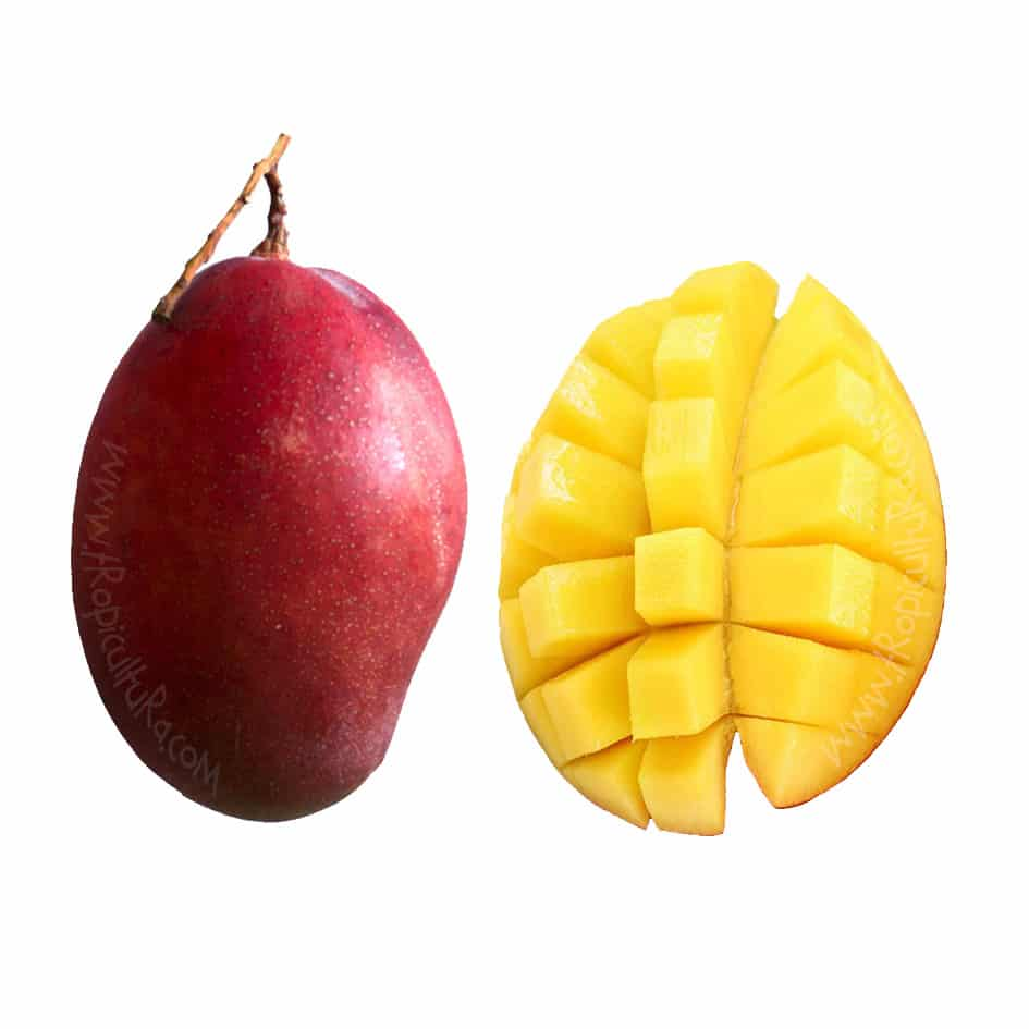 Organic Fresh Mangoes Medium 10Kg box